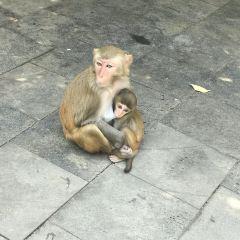 Monkey Island User Photo