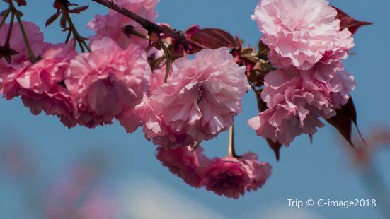 닝보 식물원