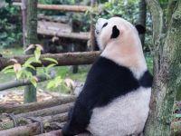 日本治癒系動物園,每天都有人在這裡重獲生活的美好~