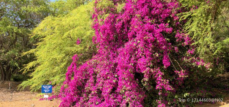 可可火山口植物園2