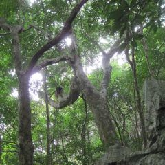 Phu Quoc National Park User Photo