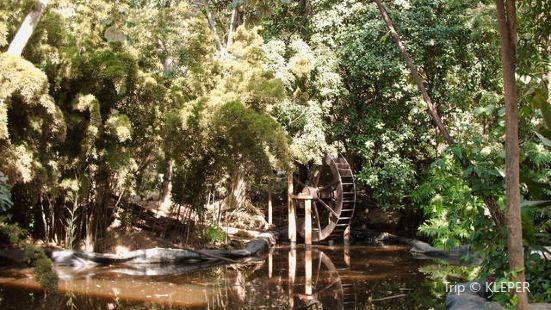 Orquideorama Jardín Botánico