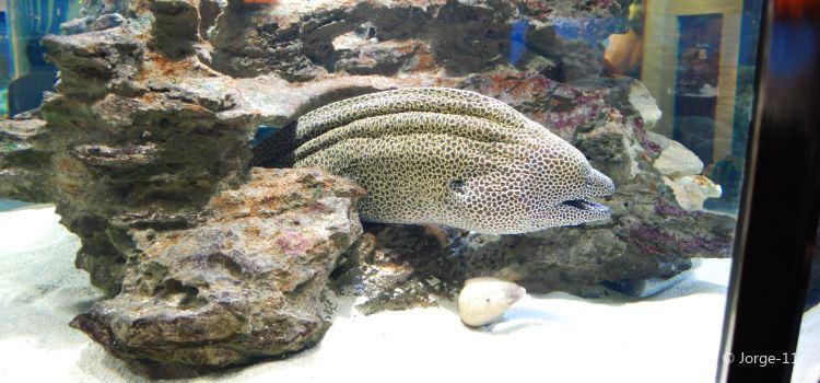 兩大洋水族館2