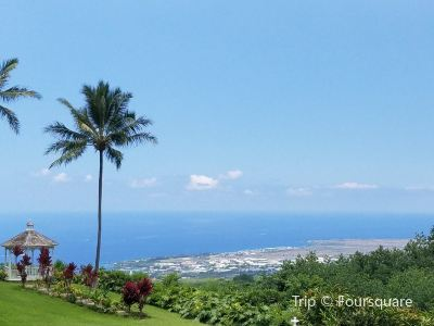 ドトールコーヒー ハワイ農園