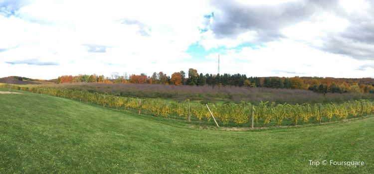 Blustone Vineyards2