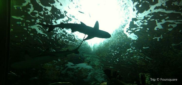 Fakieh Aquarium3