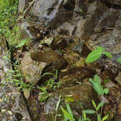 沱龍大峽穀用戶圖片