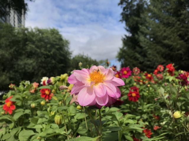 黑龍江公園