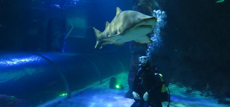 Kelly Tarlton's SEA LIFE Aquarium3