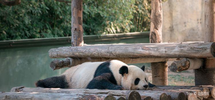 上海野生動物園2