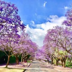 Jacaranda Avenue User Photo