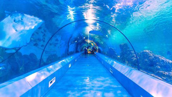 Magic Dream Aquarium