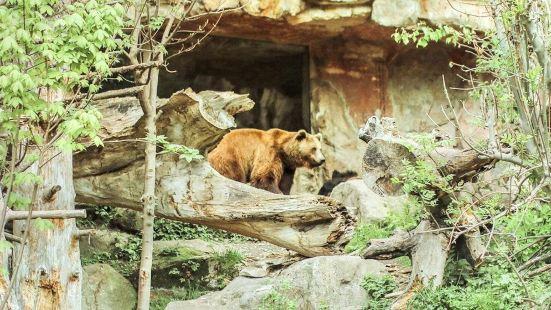阿爾卑斯山動物園
