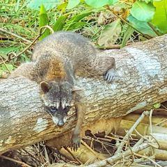 Parque Nacional Curu User Photo