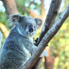 Rockhampton Zoo User Photo