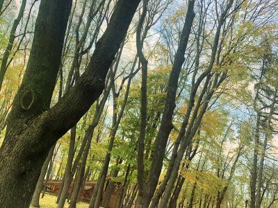 高爾基公園