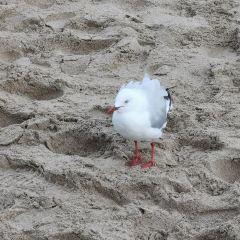 Phillip Island User Photo