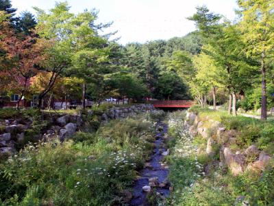 태백고원자연휴양림