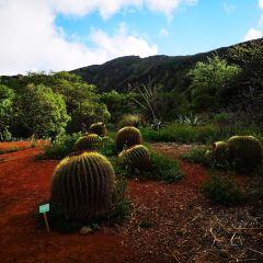 可可火山口植物園用戶圖片