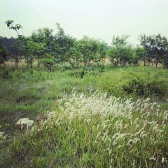 청송령 삼림공원 여행 사진