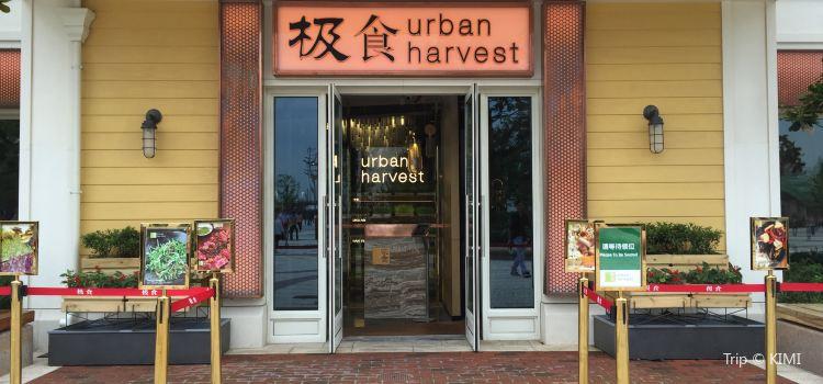 THE URBAN HARVEST 極食(迪士尼小鎮店)3