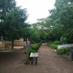 Bijarim Forest User Photo