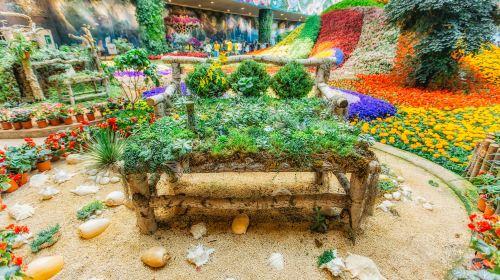 City of Flower