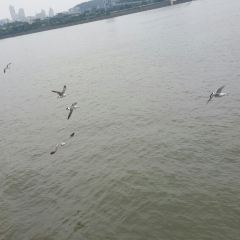 한강유람선 여행 사진