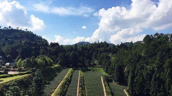 華祥苑生態茶莊園