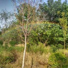 黃河彩虹穀用戶圖片