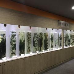 약령시한의약박물관 여행 사진