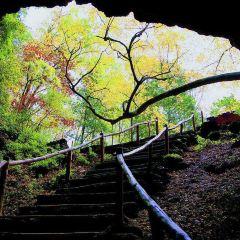 地下森林用戶圖片