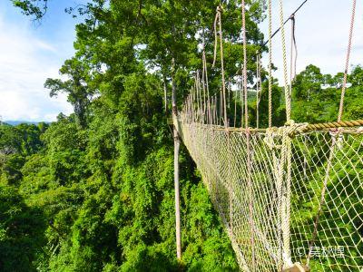 西雙版納熱帶雨林國家公園望天樹景區