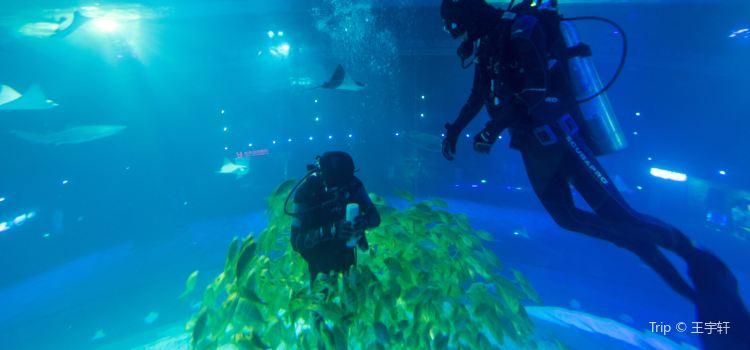 Grandview Aquarium Tickets Deals Reviews Family