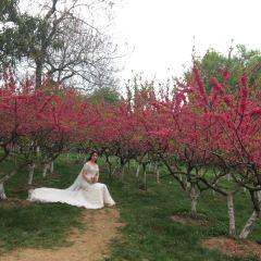 武漢植物園用戶圖片