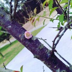Trees park User Photo