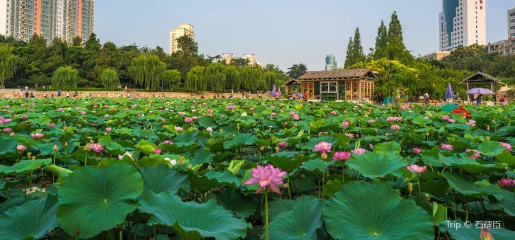 紫荊山公園