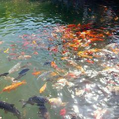 Black Dragon Pond Park User Photo