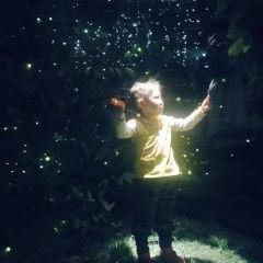 반딧불 스타아트 갤러리 여행 사진