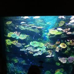 Sea Life Bangkok Ocean World User Photo
