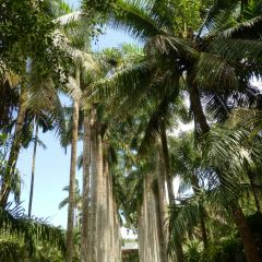싱롱식물원 여행 사진