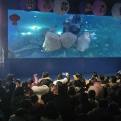 Hanhai Polar Ocean Park User Photo