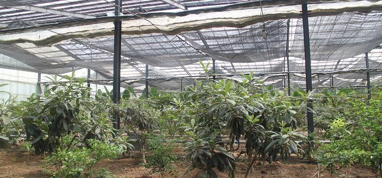 Ulugu Tropical Botanical Garden1