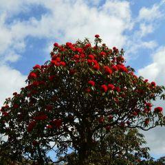 百里杜鵑風景區用戶圖片