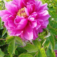 Gujin Garden User Photo