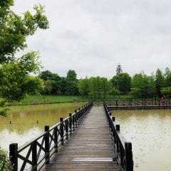 龍虎山花語世界景區用戶圖片