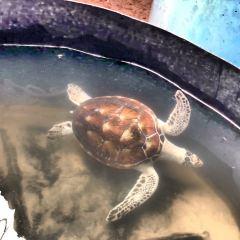 海龜孵化場用戶圖片