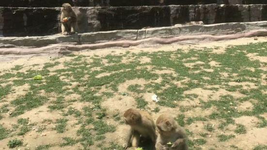 太行山獼猴自然保護區