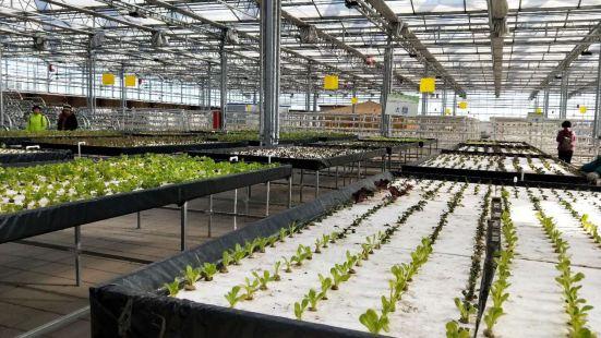 遼寧綠維農業有機莊園