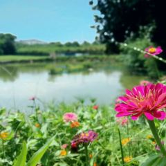 竹籬茅舍生態休閒農莊用戶圖片